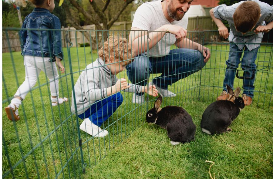 Family looking at rabbits in cage