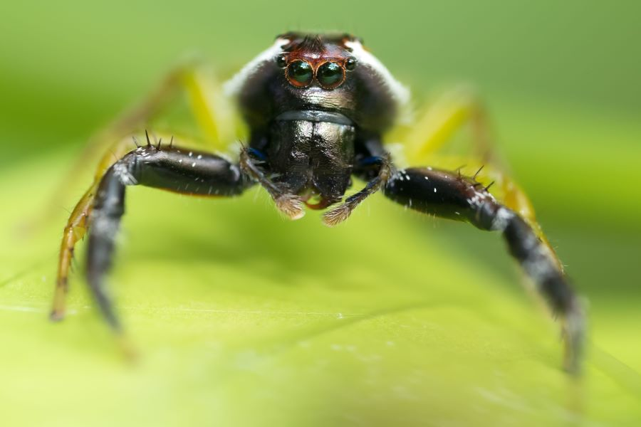 Close up of a spider on a leaf