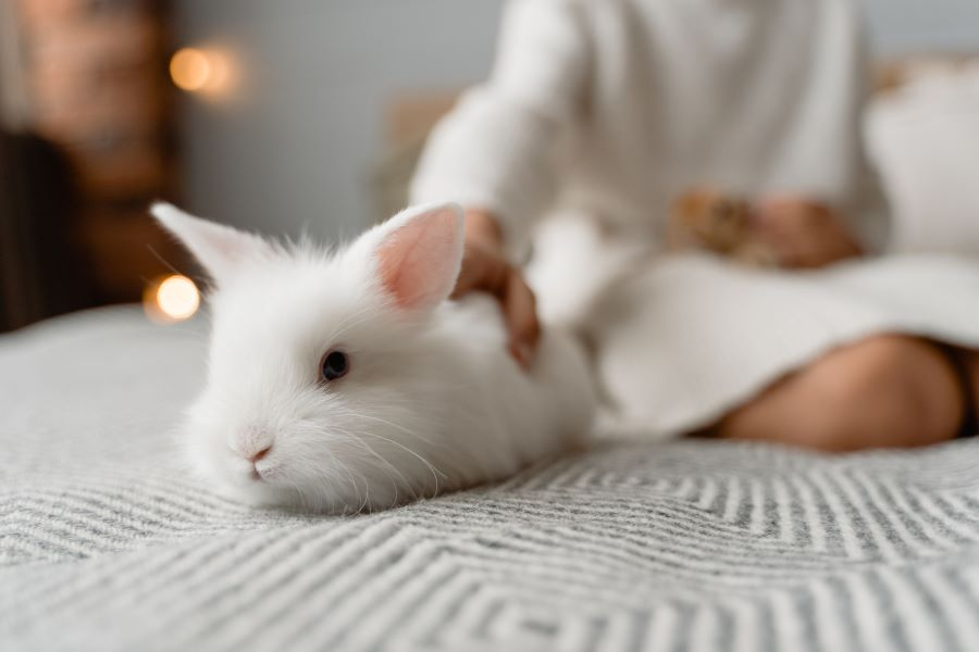white fluffy rabbit on a bed