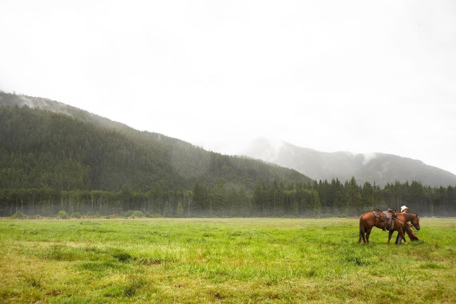 horse with owner in the rain