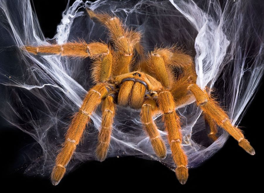 brown spider in a web
