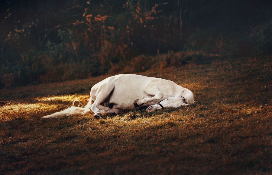 White horse sleeping on the grass at night