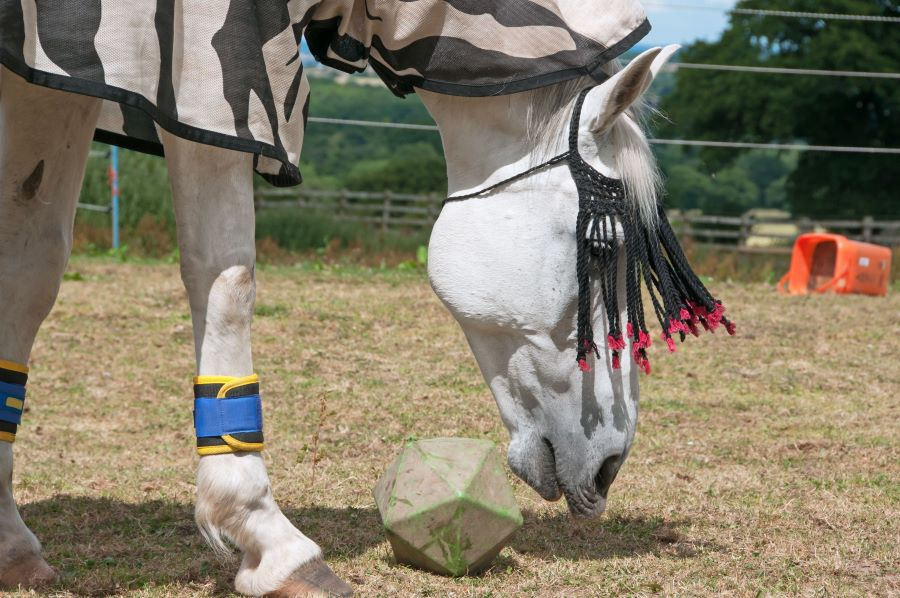 Bored horse playing with a wooden block