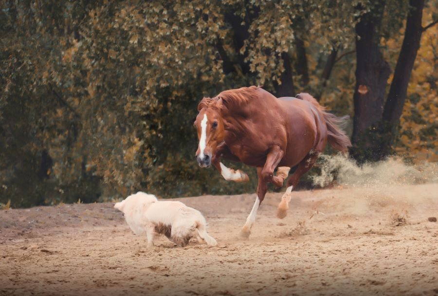 Angry horse running towards a dog