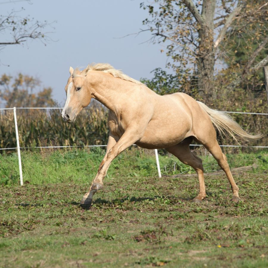 Horse running in a paddock